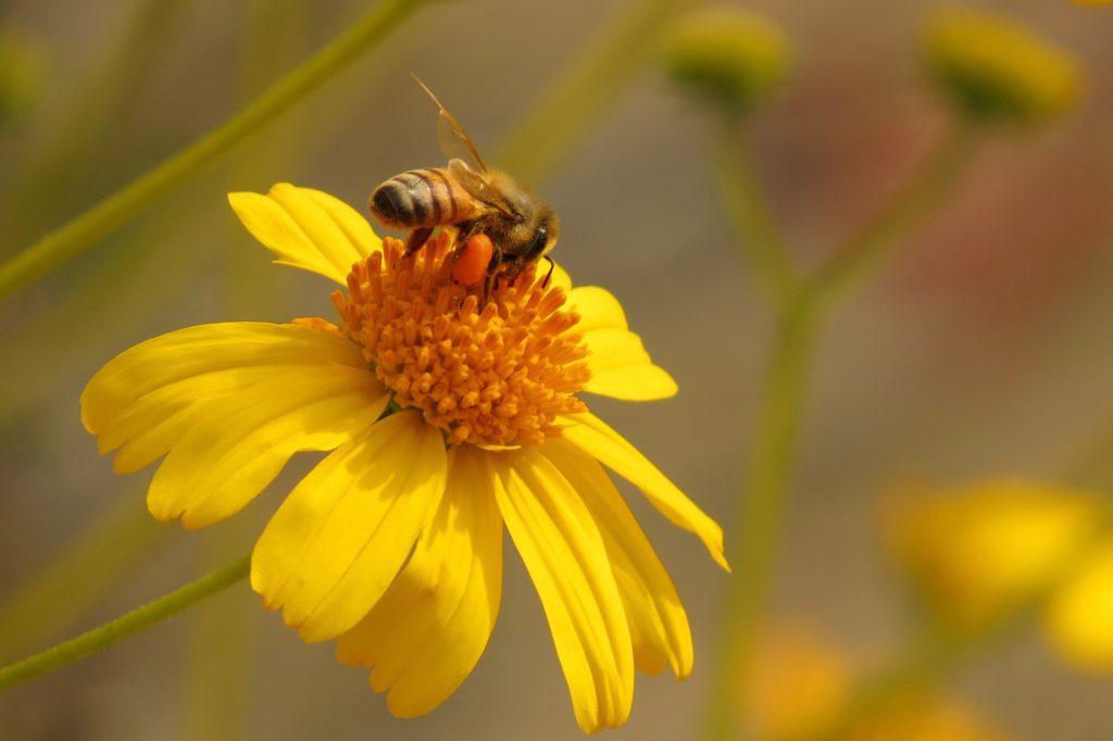 03.04.17 Bee